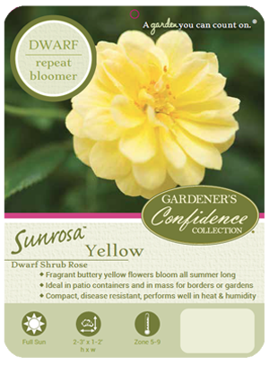 Sunrosa™ Yellow