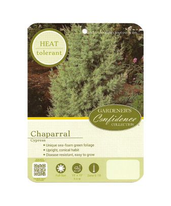 Chaparral Cypress
