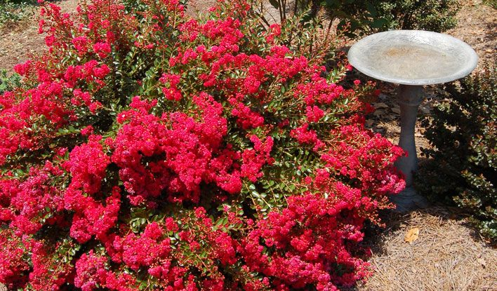 Great For M Plantings Containers And Borders