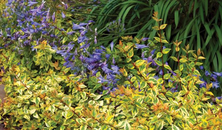 Kaleidoscope Gardeners Confidence Collection