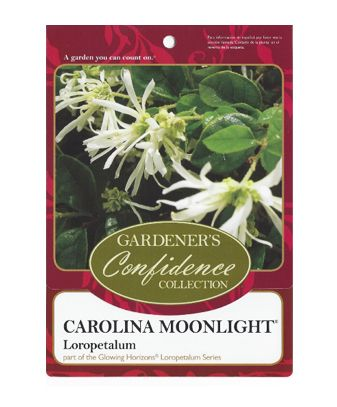 Carolina Moonlight®